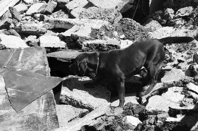May med delom na ruševini